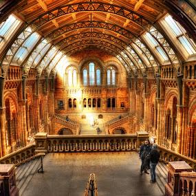 Natural History Museum  by Piotr Owczarzak - Buildings & Architecture Architectural Detail ( england, hdr, london, colors, architecture, museum, gb,  )