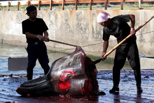 Japanese fishermen slaughter a 10m-long Baird's beaked  whale  at Wada port, Chiba prefecture. File picture.