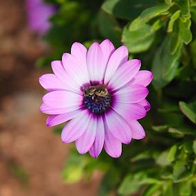 Flower power by Ukri Manu - Flowers Flower Gardens ( spring, blossom, nature, plant, garden, flower )