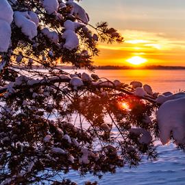 Sunset by Sakari Partio - Landscapes Sunsets & Sunrises ( snow, sunset, tree, winter, ice )