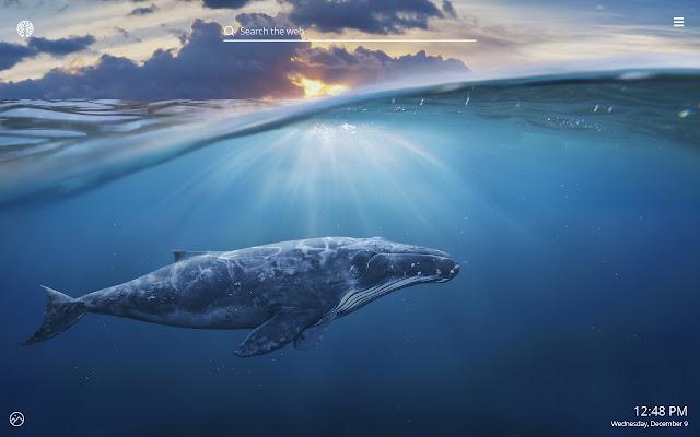 Whales Hd Wallpaper New Tab Theme
