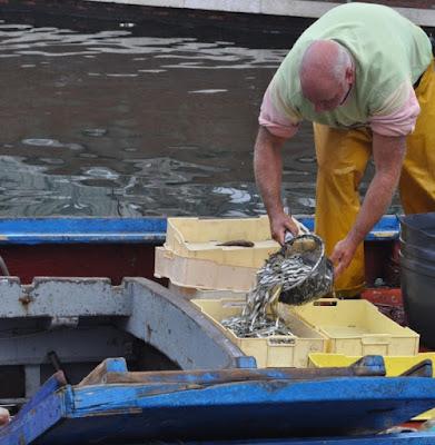 Selezione del pesce di dinovaccaro