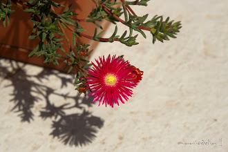 Photo: #flowers