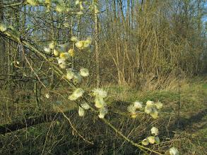 Photo: 16 maart: de winter is al lang voorbij