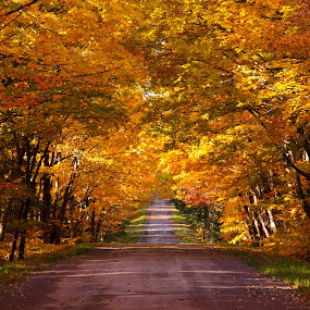 Old Road Fall Colors  by David Johnson - Landscapes Forests ( fall colors, colorful, old road, high quality, maple leaves )