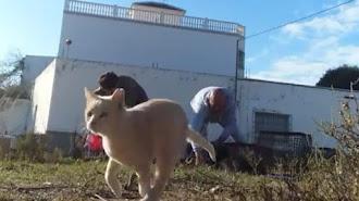 Un gato castrado en El Ejido, en el momento de su suelta.