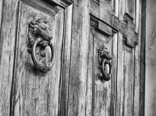 I due leoni di Alessandro Isaia