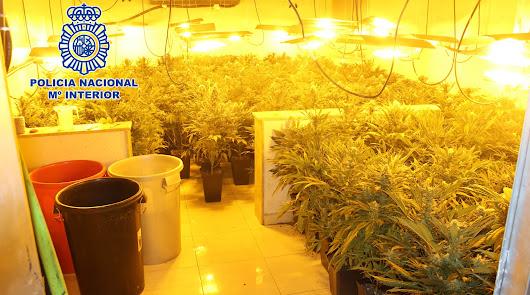 Cinco detenidos en el Barrio Alto y El Zapillo con plantaciones de marihuana