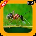 New Ant Photo Frames icon