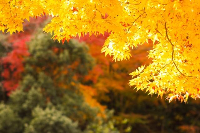 the autumn leaves in Kyoto