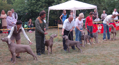 Photo: Najlepszy reproduktor - Progeny Competition - Best Stud Dog