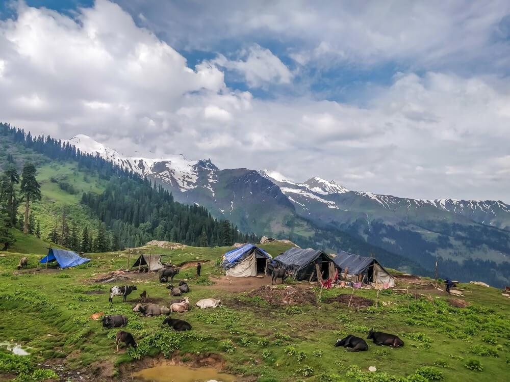 bhunbhuni+shepherds+parvati+valley+sosan