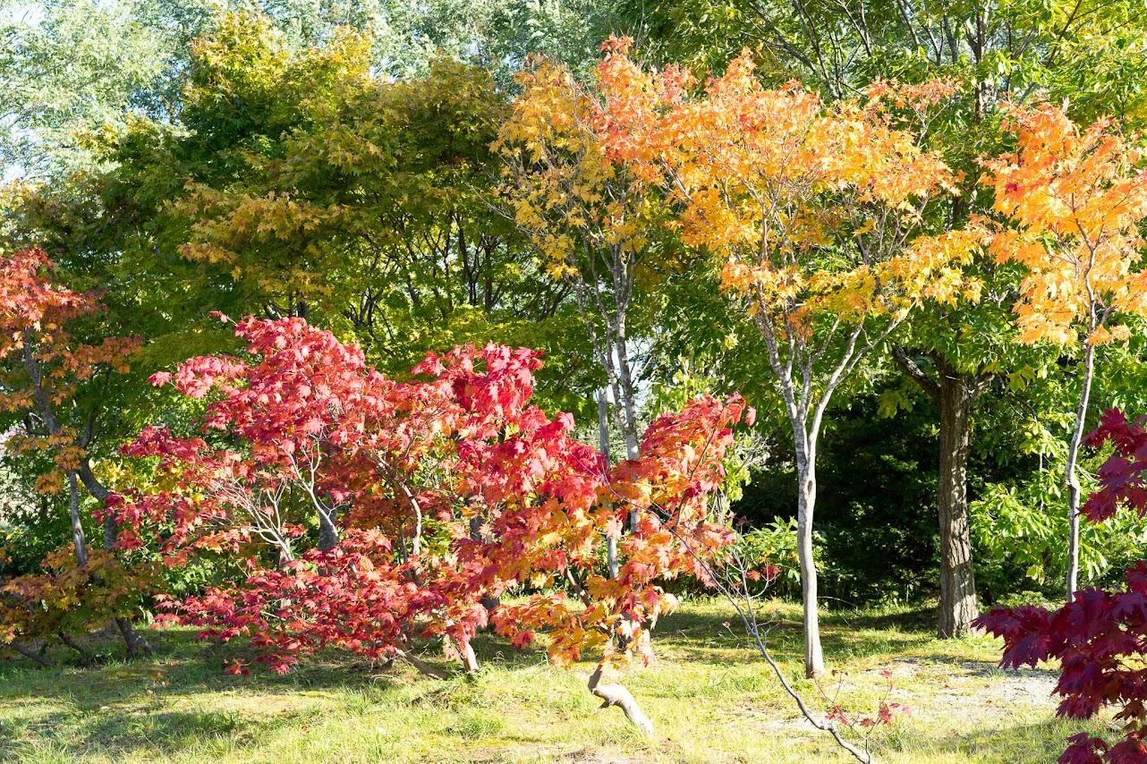 イチイの森の紅葉