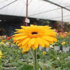 by Amien Nur ain - Flowers Flower Gardens