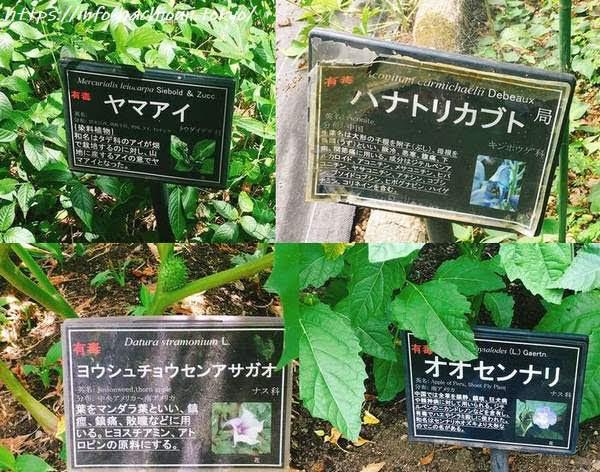 東京薬科大学薬用植物園 毒草
