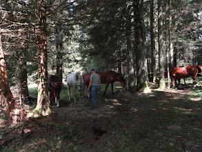 Photo: Elli s'occupe de la pause et du repas des chevaux / Elli sorgt für das Wohl der Pferde