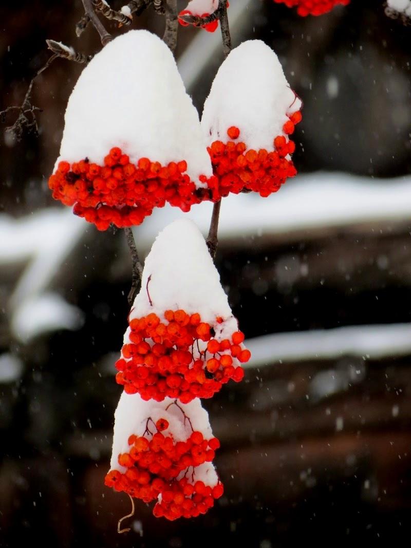 Cappucci di neve di pizzicastelle