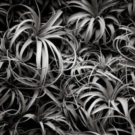 Plant Wall by Michael Holmes - Black & White Flowers & Plants ( flowers & plants, black & white, longwood gardens )