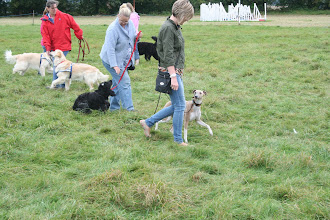 Photo: Claire with Henry Whippet, Pippa with Harvey Cocker and Jo with Jasper Golden