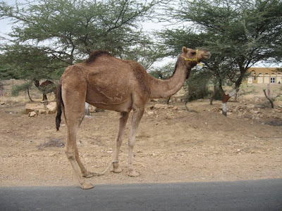 Shimmering Jaisalmer – Sand Dunes, Fossils and a vacant village