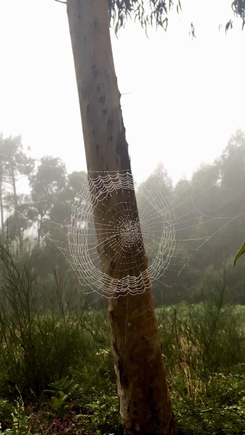 La magia dei ragni di SaraMara86