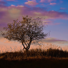 Tree by Andy Bigelow - Landscapes Sunsets & Sunrises ( #landscape, #dramaticsky, #sunset, #sky, #tree )