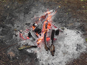 Photo: A small fire provides the coals for the fire under the pig.