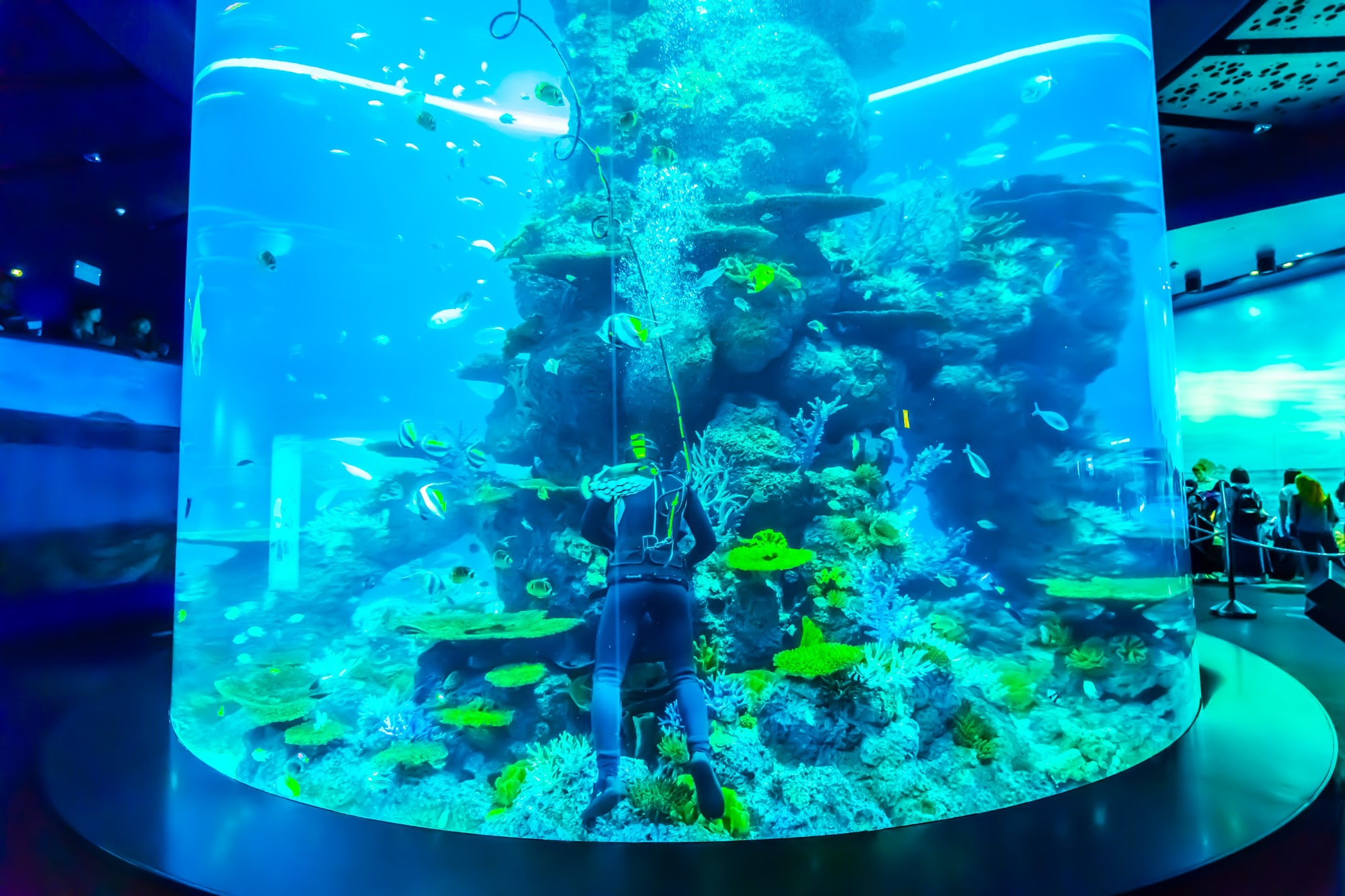 Singapore Sentosa S.E.A. Aquarium Coral Garden1