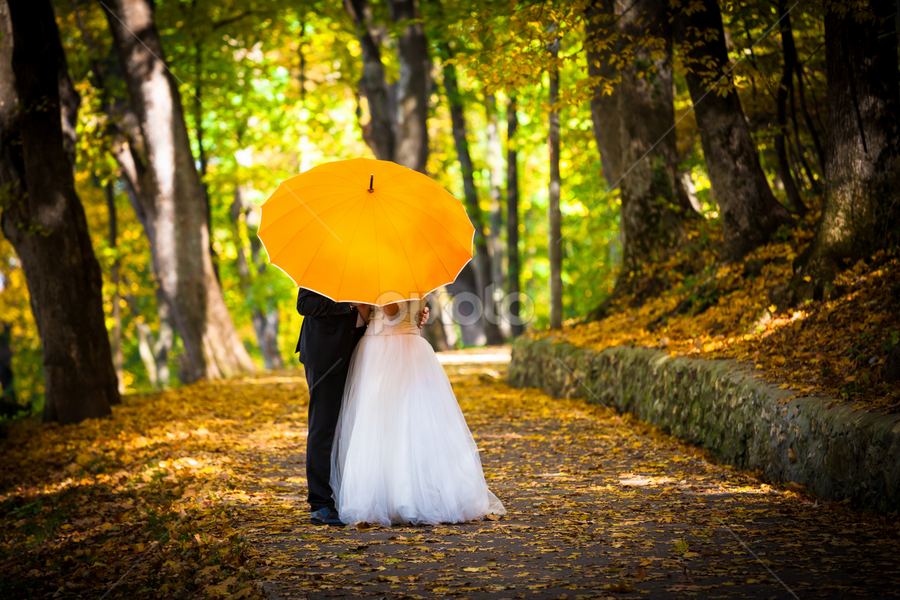 Young married couple in love kissing under umbrella by Cornel Achirei - Wedding Bride & Groom ( walking, yellow, beauty, people, together, alley, love, forrest, girl, married, leafs, autumn, foliage, woman, path, couple, bride, smile, man, kissing, park, elegance, green, beautiful, umbrella, under, romantic, happiness, adult, marriage, young, two, bridal, female, dress, wedding, background, outdoor, fall, trees, day, walk, groom )