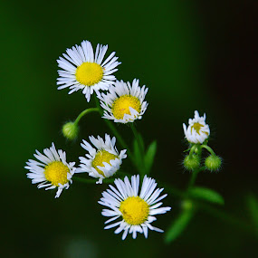 by John Berry - Flowers Flowers in the Wild
