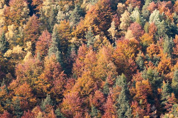 Quadro d'autunno di martina96