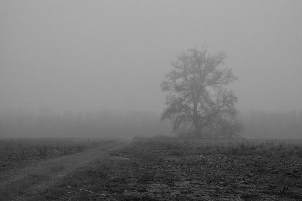 Tree di Giomi