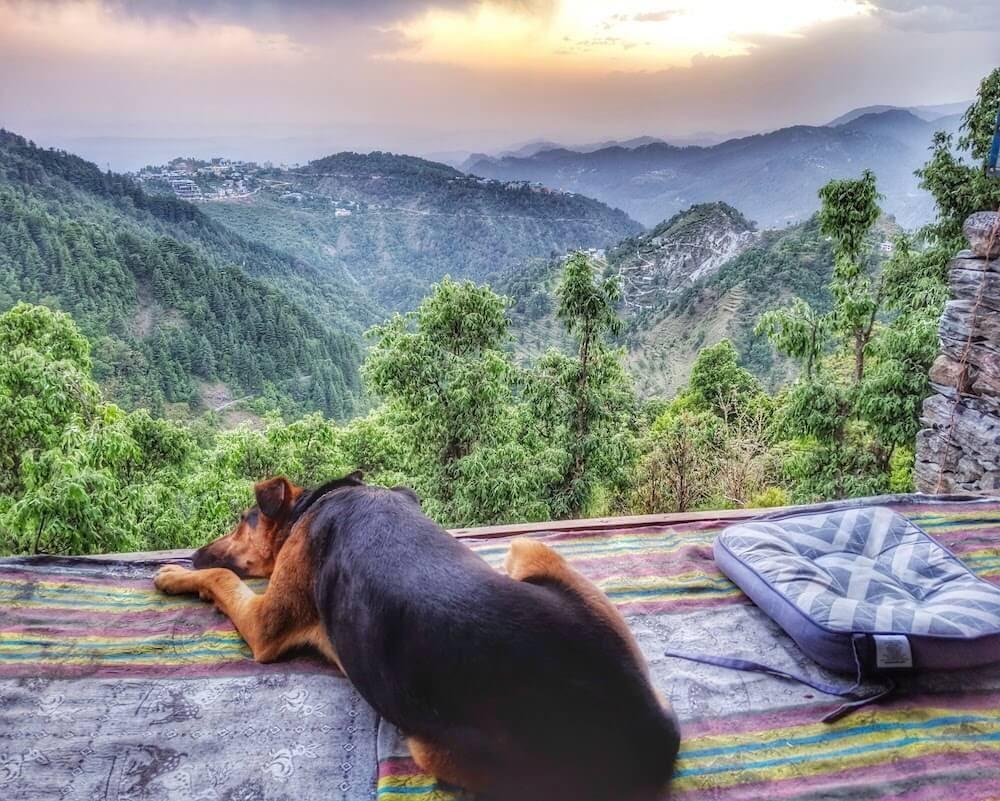 mcleodganj+himachal+pradesh+waterfall+hike+dharamshala