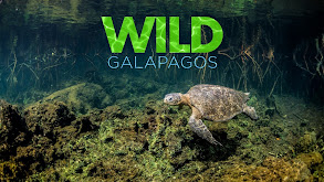 Wild Galapagos thumbnail