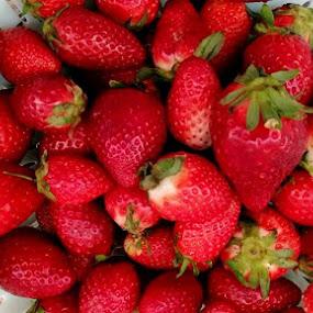 Strawberries by Bozica Trnka - Food & Drink Fruits & Vegetables ( red, nature, fruit, strawberry, food )