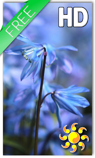 Blue Flower Live Wallpaper