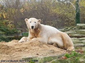 Photo: Knut macht es sich hier bequem ;-)