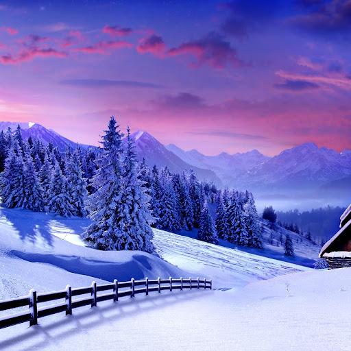 冬の自然ライブ壁紙