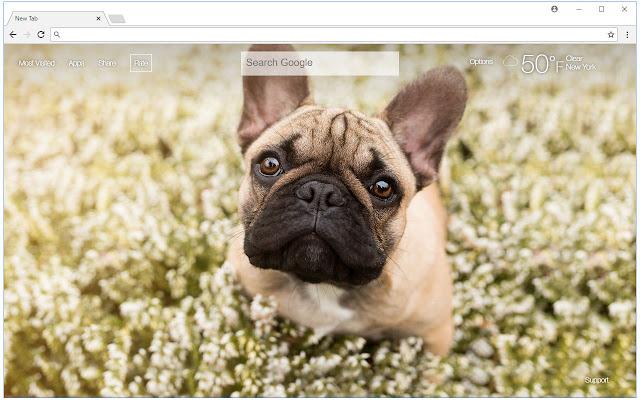 Bulldogs HD Wallpaper New Tab Themes