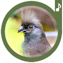 Sons d'oiseaux icon