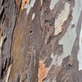 Tree trunk patterns by Govindarajan Raghavan - Abstract Patterns (  )