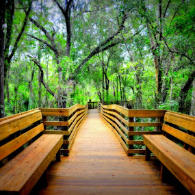 The Boardwalk at Lettuce Lake by Emily Vickers - City,  Street & Park  Neighborhoods ( conserve, benches, park, conservation, florida, trees, forest, woods, boardwalk, swamp, lettuce lake park )