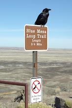 Photo: Raven on Do Not Feed Wildlife sign, Petrified Forest National Park, Arizona