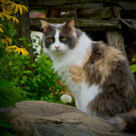 by Marie Schmidt - Animals - Cats Portraits
