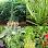 Apl Plantes médicinales (APK) percuma muat turun untuk Android/PC/Windows