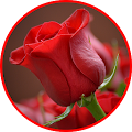 Flowers And Roses 🌷 Animated Images Gif APK