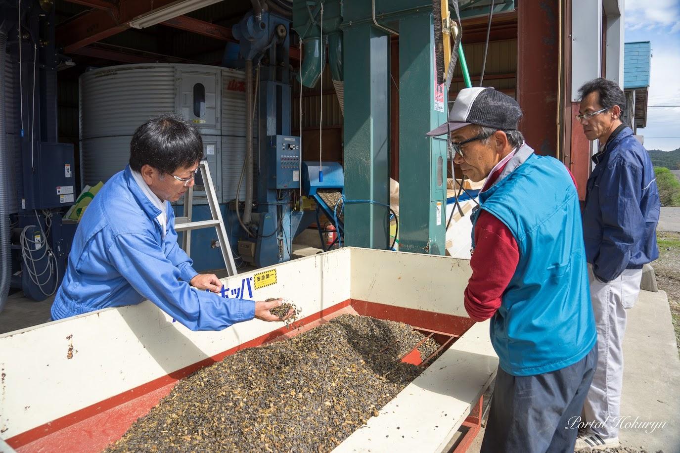 「今年の種は去年よりふっくらしている」と話す、濱田敬一 課長補佐