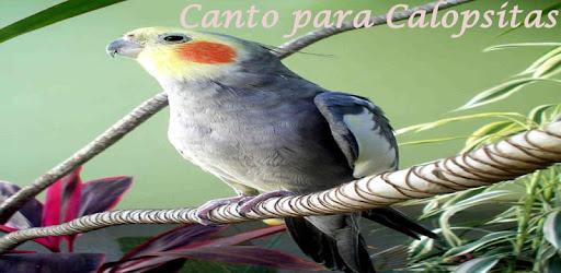 CALOPSITAS CANTO DAS BAIXAR CD