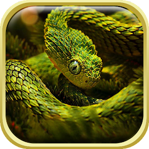 Download Snake Live Wallpaper HD for PC