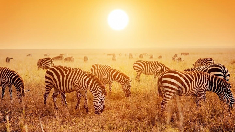 Watch Africa's Wild Horizons live